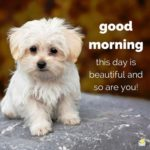 Cute Good Morning Wishes Pinterest