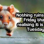 Hilarious Tuesday Quotes Twitter